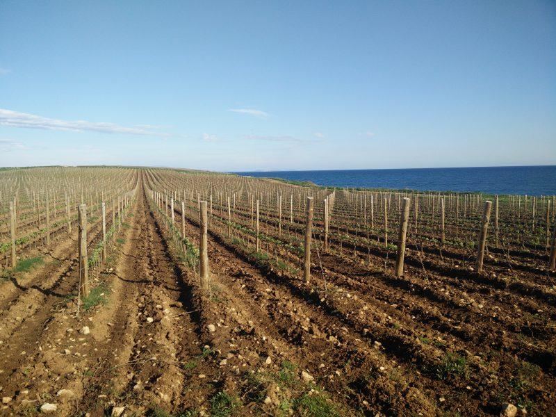 South Istria wine tour