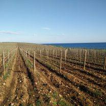 Pula wine tour